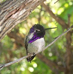 Visit - Tucson Botanical Garden