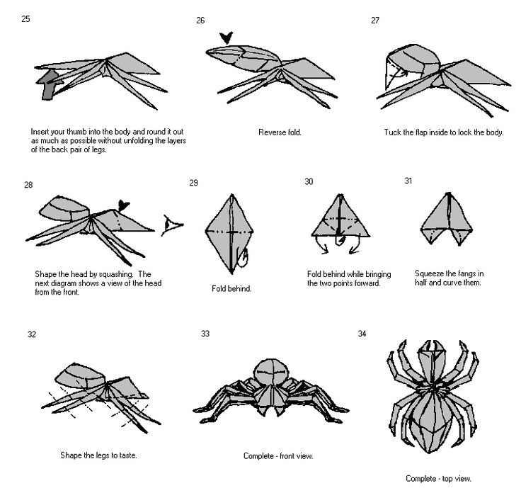best 25  spider diagram ideas on pinterest