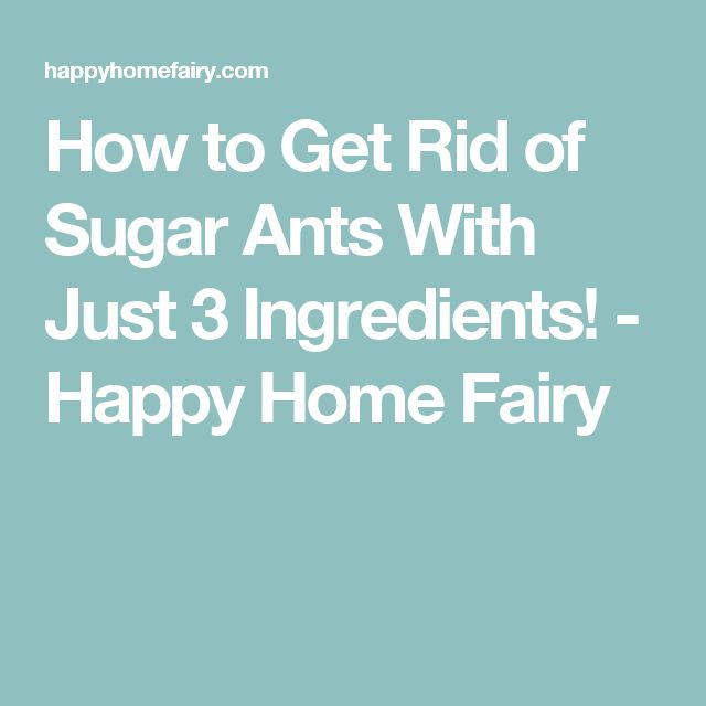 How to Get Rid of Sugar Ants With Just 3 Ingredients! - Happy Home Fairy