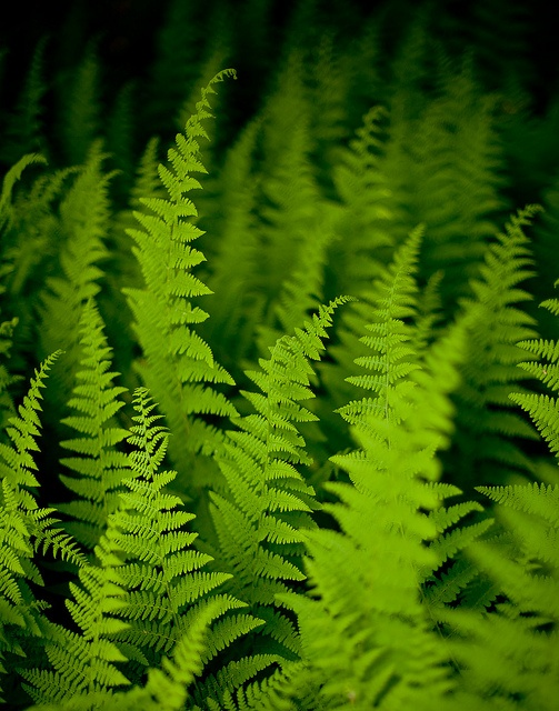 I have some fern by my back porch.