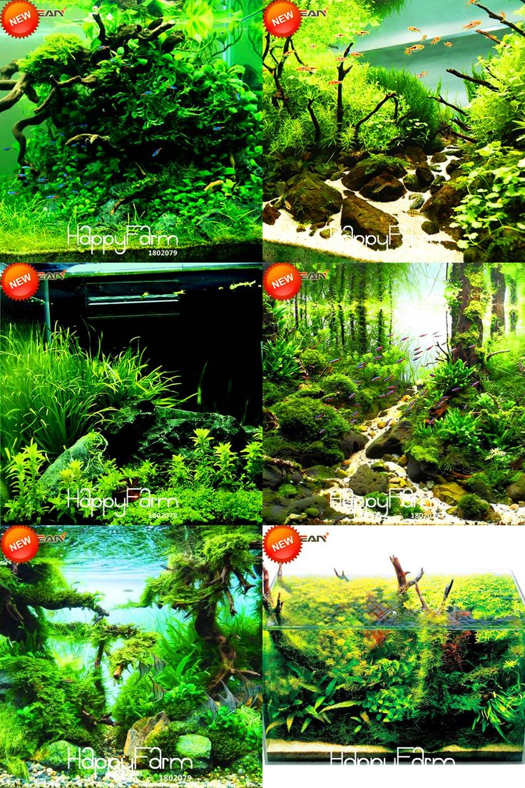 [Visit to Buy] Big Sale!500 pcs/Pack Aquarium Grass Seeds Water Grasses Random Aquatic Plant Grass Indoor Beautifying Seeds,#S8PXQE #Advertisement