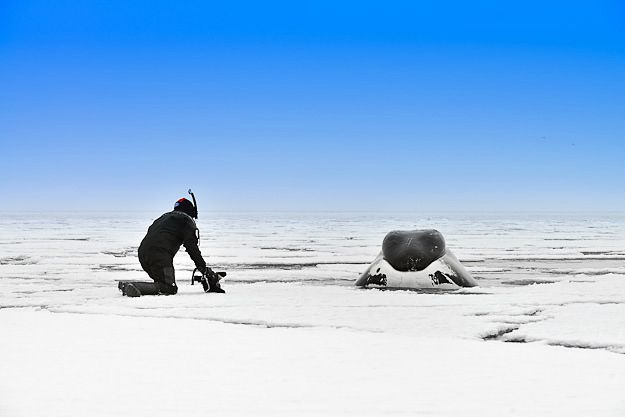 Close encounter with a bowhead whale at Nunavut Arctic Canada