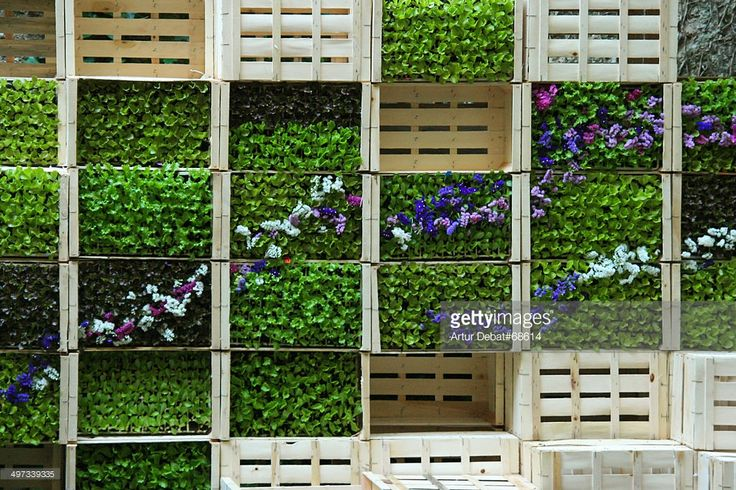Vertical garden made with wooden boxes in patio of house in the city of Girona.