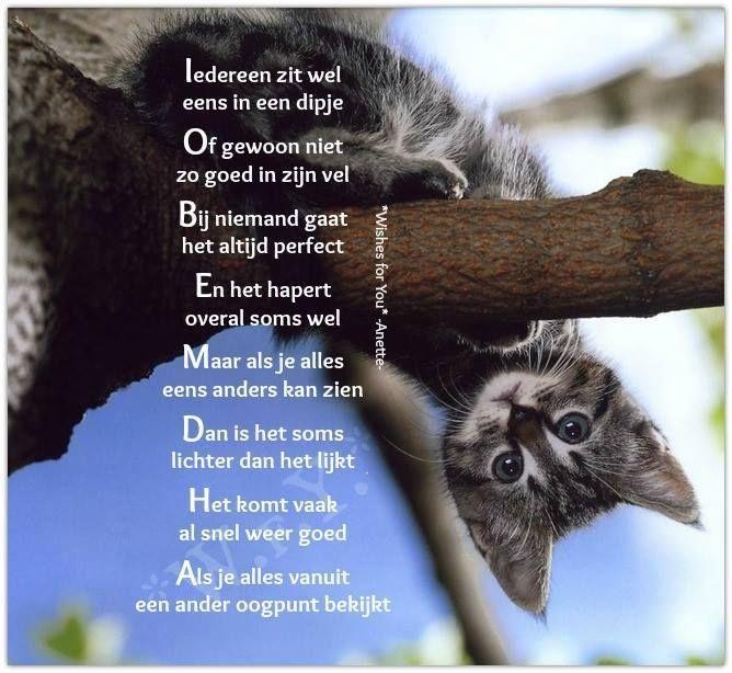 Citaten Over Dieren : Beste ideeën over katten grappige spreuken op pinterest