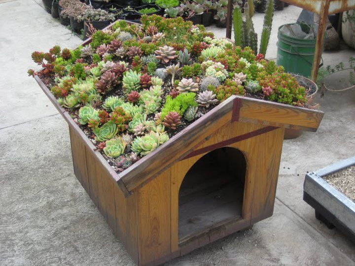green roofed doghouse