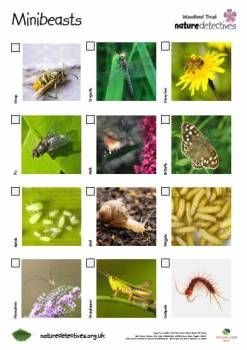 MINIBEAST GARDEN HUNT: This is a really cool free printable minibeast hunting sheet from Nature Detectives. Get your kids out in the garden finding wee beasties!