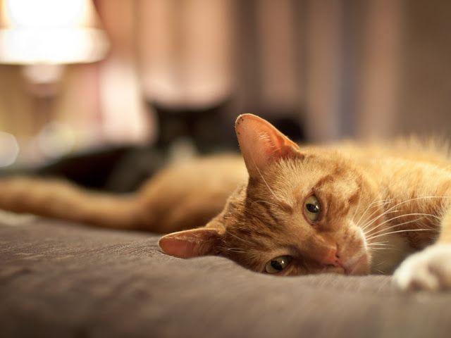 Cómo aprovechar las noches de insomnio para mejorar tu productividad