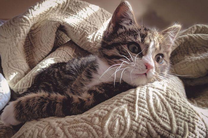 kerti terápia a macskában
