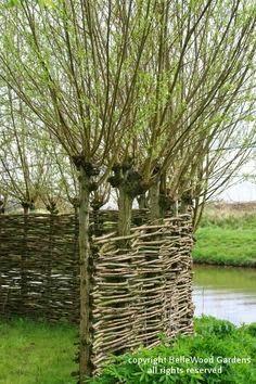 Queridos amigos,   Os ingleses usam imanso as estruturas em ramos de salgueiros, quer com os próprios salgueiros vivos, quer com os ramos...
