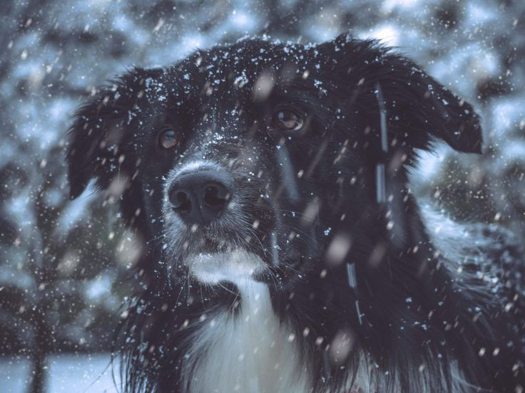 10 Winter Safety Tips For Animals Things You Need to