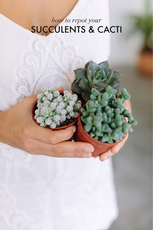 HOW TO REPOT SUCCULENTS AND CACTI (via Bloglovin.com )