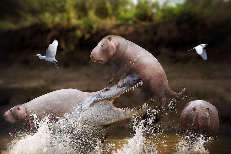 Purussaurus attacks a Phoberomys by Julio Lacerda ...
