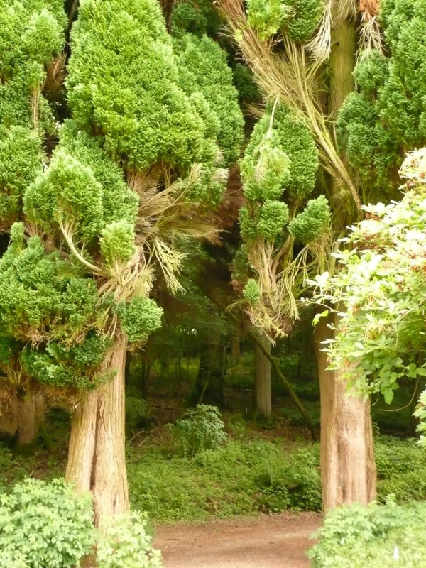 190 best images about trees trees trees on pinterest