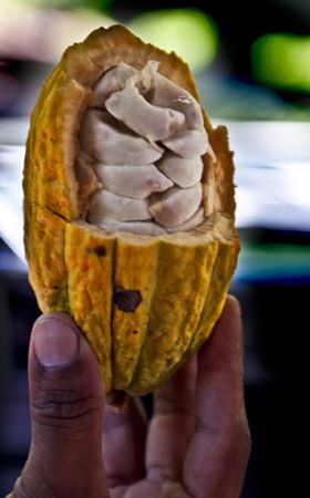 Cocoa bean, Nicaragua- Yes, I think this is a work of art ;)