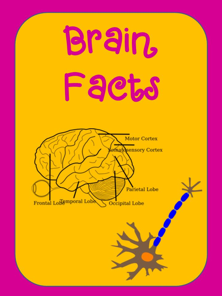 Elementary Matters: Brain Facts