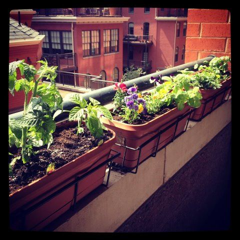 balcony herb garden ideas - need to find these holders