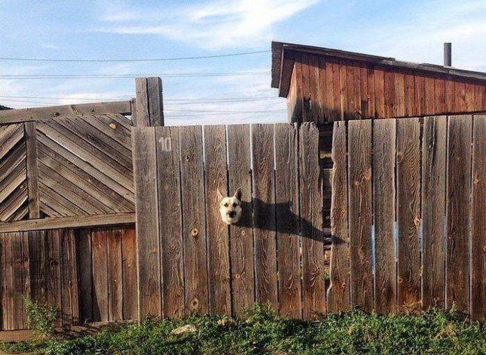 Сторожевая собака – новый уровень.