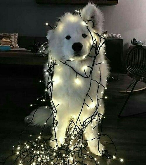 Everyone loves dogs and fairylights użytkownika Sinem | We Heart It on imgfave