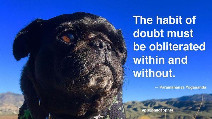 """Today's dose of pug wisdom comes to us by way of Paramahansa Yogananda: """"The habit of doubt must be obliterated within and without."""" #pugphilosopher #paramahansayogananda #nebbiequotesaquote #nursenebbie #nebulathepug #nebbie #nebbiethepug #nebulathepotbellypug #potbellypug #seniorpugsofinstagram #seniorpugsrule #rescuepugsofinstagram  #rescuepug #rescuepugsrock #adoptdontshop #spcaLA #blackpugoftheday #snugwithpug #pugsofficial #pugworld #zerozeropug #speakpug #pugbasement #instapug…"""