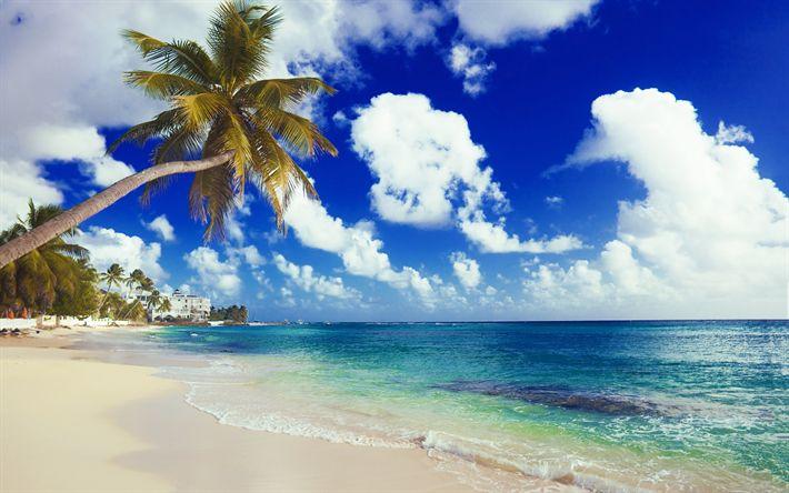 Hämta bilder Palms, havet, tropiska ön, beach, sommar, sommarlov