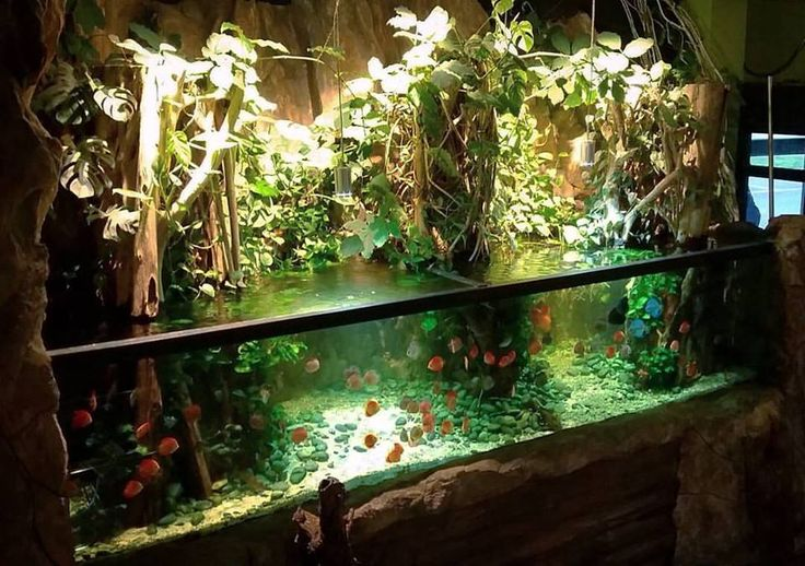 Oliver Knott Aquarium