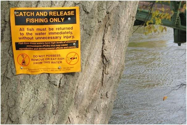 The Hudson has had to endure almost 200 years of human garbage, chemical and sewage pollution