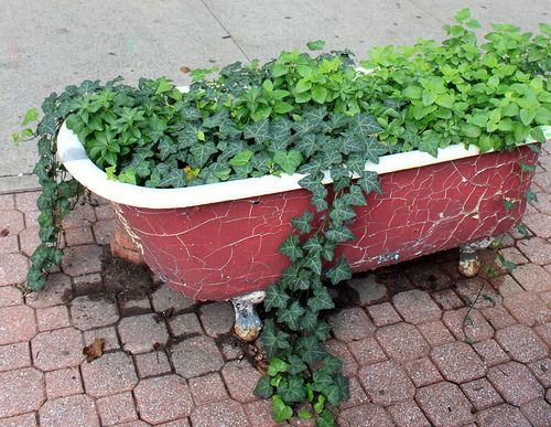 Old Cracked Looking Red Bathtub Turned To Container Gardening For Stunning  Vines...so