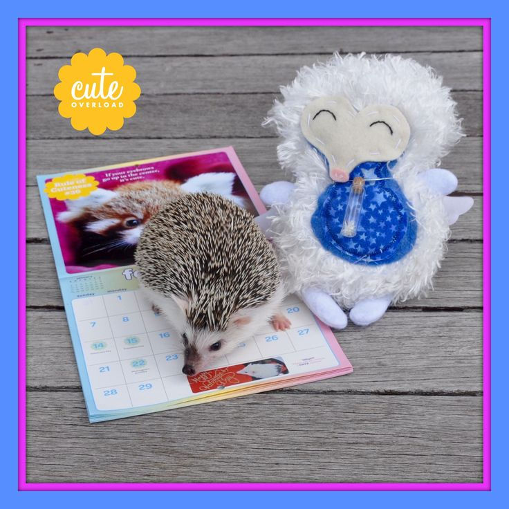 PRESENTING... The 2016 Cute Overload Mini Wall Calendar... and the 2016 Cute Overload Wall Calendar! (Both available now at Amazon.com. You can also order at Calendars.com!) Both have months of bri...