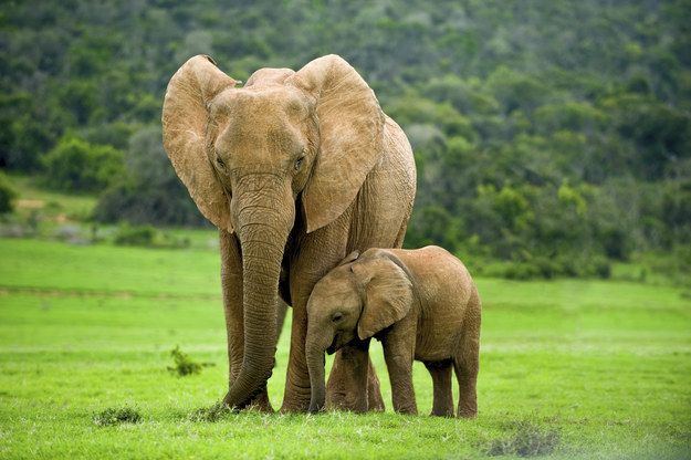 This mother and daughter. | 22 Photos That Prove Elephants Make The World A Better Place