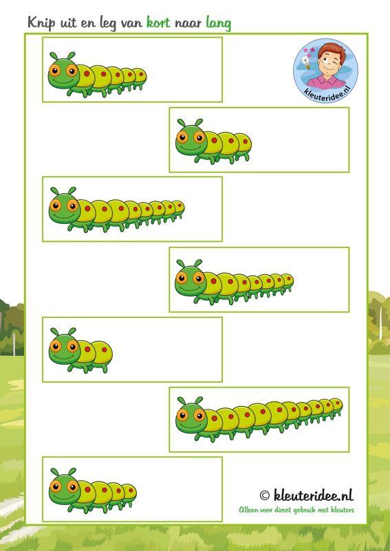 Knip uit en leg de rups van kort naar lang, thema insecten voor kleuters, kleuteridee, free printable.