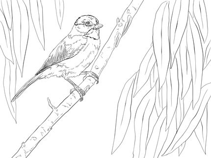 Click To See Printable Version Of Carolina Chickadee Perched On A Branch Coloring Page