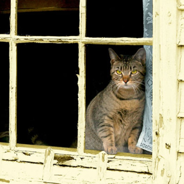 71 Best Cat In Broken Window Images On Pinterest Kitty