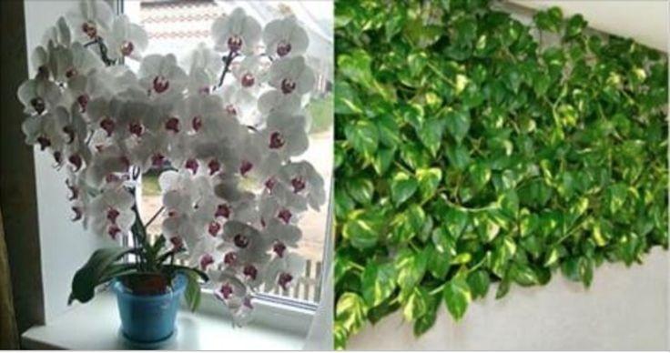 Fertilizante caseiro que vai fazer as suas plantas crescerem mais rápido e mais bonitas! - Receitas e Dicas Caseira