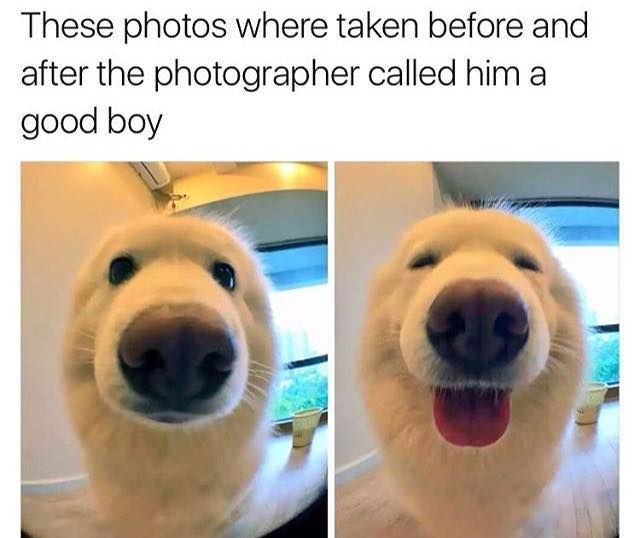 """""""Oh,yes I am a good boy human yes,yes,yes!"""""""