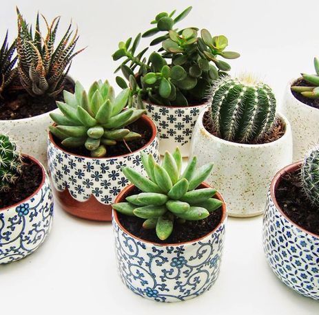 Succulents Cactus Diy Potted Plantsindoor