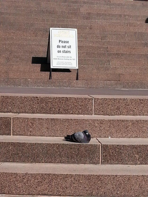 And this bird, who won't listen to authority.   31 People Who Embody The True Spirit Of Anarchy