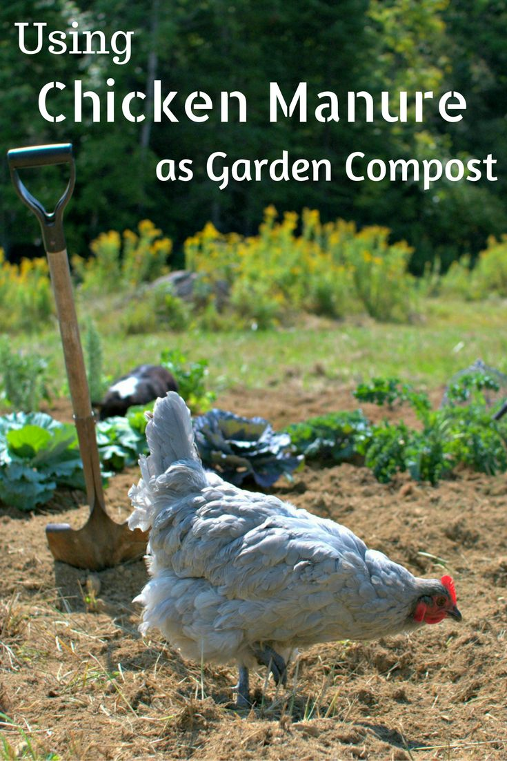 105 Best Images About Gardening Know How Guest Blogs On Pinterest Gardens Contractors License