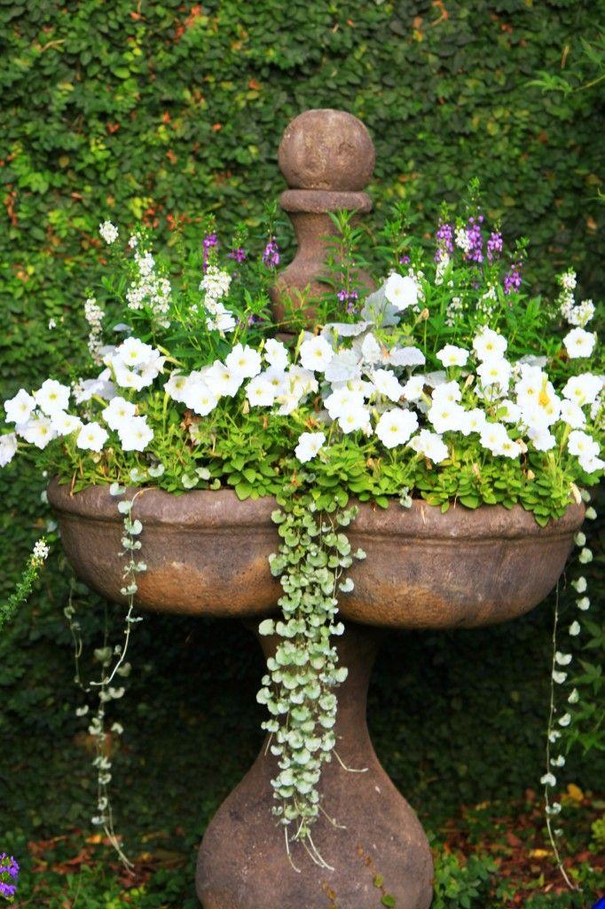 looooooooooooove this old stone urn and the flowing flowers!!!!!!!