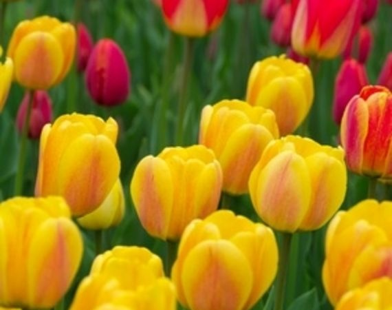 87 best perennials for montana images on pinterest flower beds a list of full sun perennial flowers in zone 4 mightylinksfo