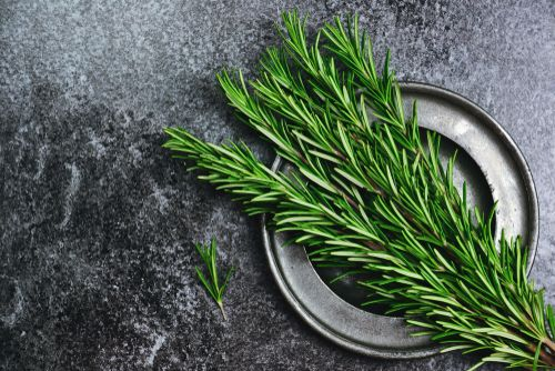Rosemary On A Plate Herbs Best Herbs To Grow Rosemary Herb