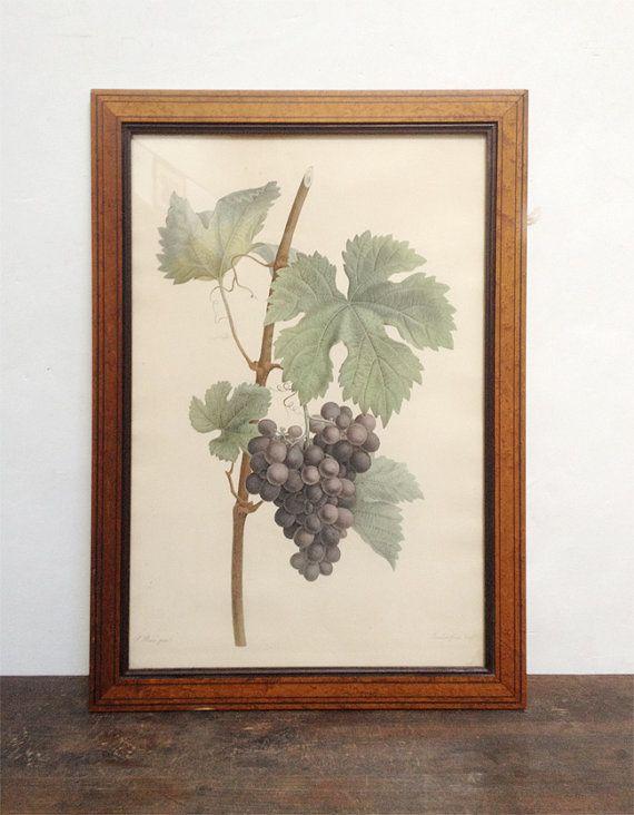 Old Engraving Framed  Grapes Illustration by ParisVintageGalerie