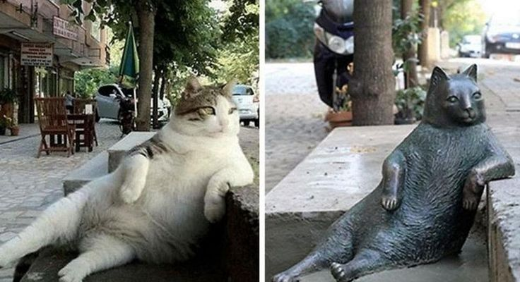 Istanbuls Famous Meme Cat Honored With Statue