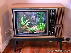 Old TV into a fish tank... soothing just looking at the picture.