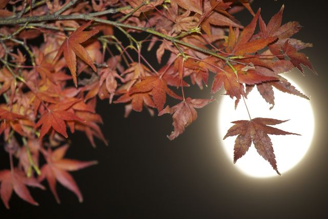 Hold an Autumn Full Moon Ritual: Celebrate the autumn full moon outdoors!