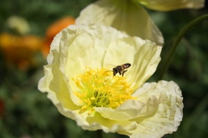 See it here too: http://makki-summer.deviantart.com/art/Bright-and-Bee-320077691