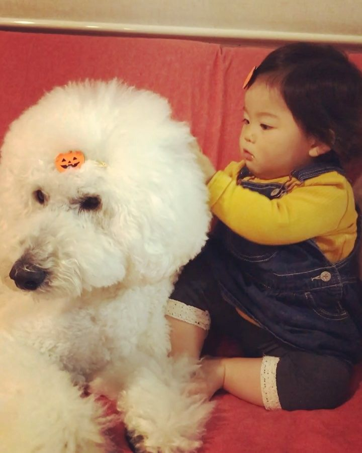 . . お友達からいただいたハロウィンぱっちんどめ. まめちゃんとりっくん お揃いでつけてみたよ(). . Matching hair accessories . . #standardpoodle #poodlesofinstagram #スタンダードプードル #whitepoodle #大型犬と子供 #poodle #dogstagram #east_dog_japan #いぬのいる生活 #もふもふ部 #わんこ部 #赤ちゃんと犬 #baby #babyanddog #adorablebaby #kawaii #1歳3ヶ月 #コドモノ #ママリ #ベビフル #キズナ #ハロウィン #halloween #お揃い #ぱっちんどめ