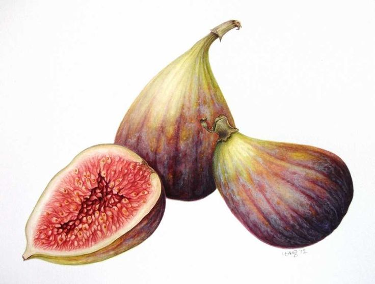 Figs botanical - gorgeous picture by Leigh Ann Gale