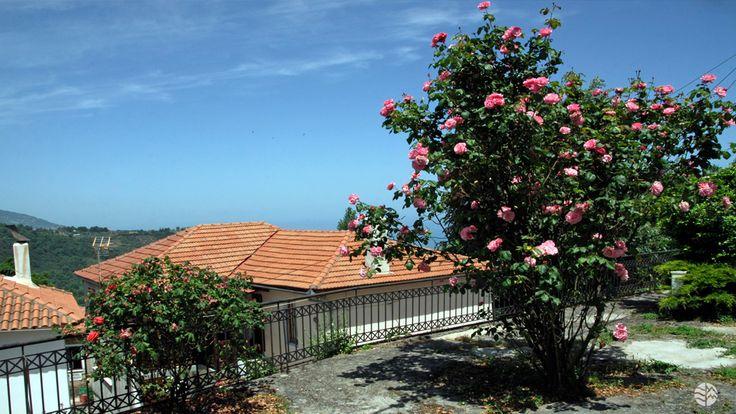 Anilio, East Pelion #Pelion #Greece #flowers #roses