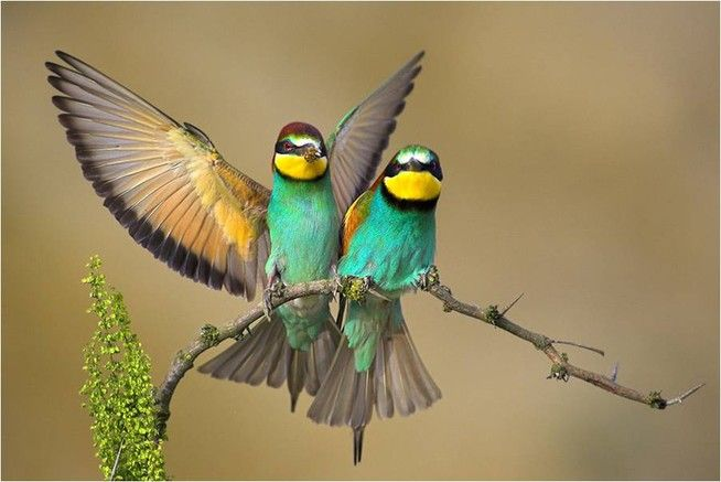 piękne ptaki