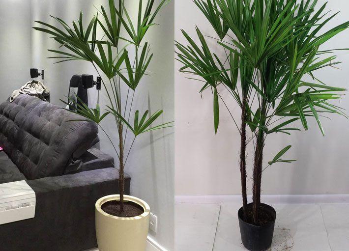 7012 best blog comprando meu ap images on pinterest for Plantas para dentro de casa sombra